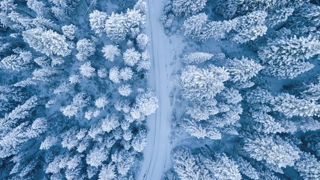 Zasnežená cesta uprostred zasneženého ihličnatého lesa.jpg